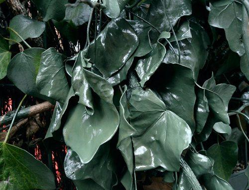 Arte urbano en la universidad: plantas secas arregladas con pintura