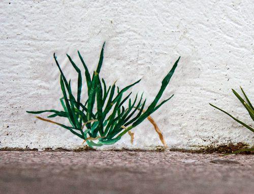Arte urbano en la universidad: retratando malas hierbas